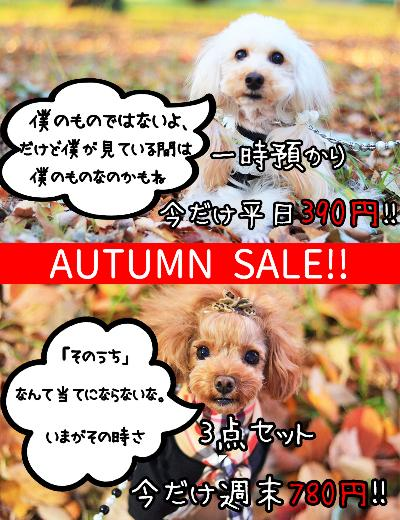 【AUTUMNSALE】